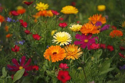 Geli/Blick in eine Blumenwiese 3, Some rights reserved, Quelle: www.pics.de
