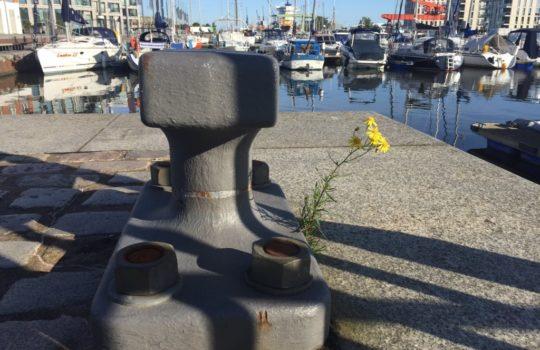 Platz für Natur: Auch am Hafenpoller findet sich der Umweltschutz-Gedanke der Marina wieder.