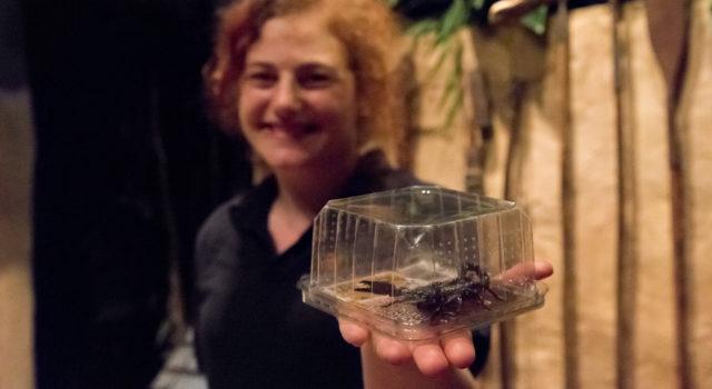 Fund beim Zoll: Dieser Skorpion kam mit einer Holzlieferung aus Asien