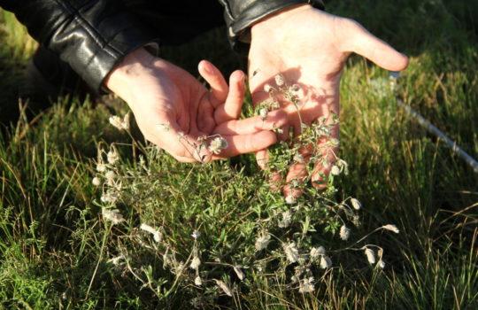 Vollpension: Für die Bienen wurde das Hoteldach mit blühenden Pflanzen begrünt.