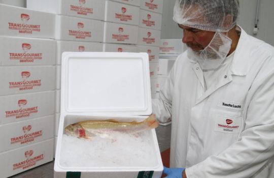 Fisch aus nachhaltiger Aquakultur