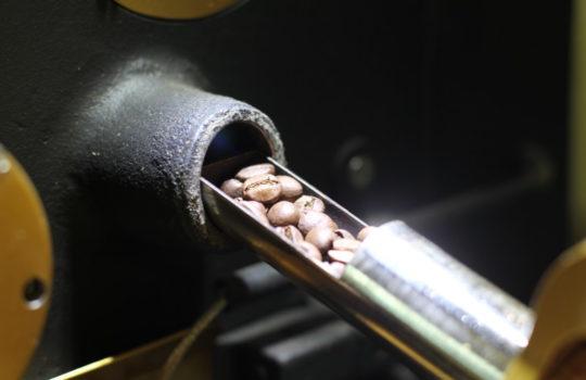 Der erste Knackpunkt ist erreicht: Geröstete Kaffeebohnen.