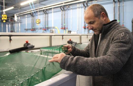 Überwacht die Projekte im Institut für Fischereiökologie persönlich: Institutsleiter Dr. Reinhold Hanel.Foto: Helmut Stapel