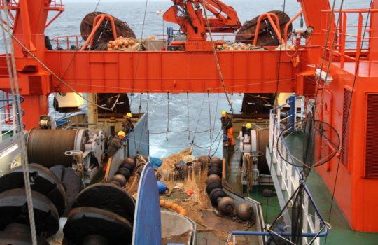 Forscheralltag auf der Walter-Herwig III: Das Netz mit dem Fischfang für die Ermittlung der EU-Fangquote. Foto: Karl-Michael Werner.