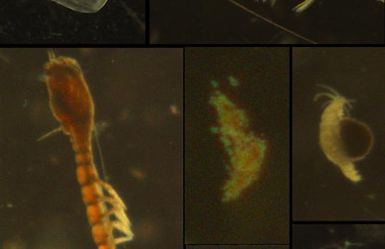 Plankton in der Nordsee
