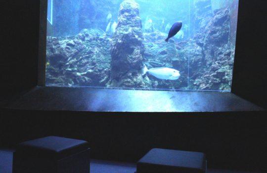 Zeigt den Unterwasserblick auf Südseefische und Riff: das Aquarium im Klimahaus. Foto: Helmut Stapel