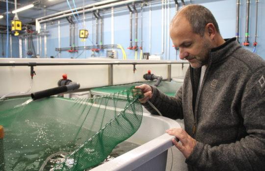 Führend in der Aquakulturforschung: das Thünen-Institut für Fischereiökologie  im Fischereihafen. Foto: Helmut Stapel