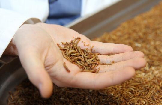 Insektenprojekt der Hochschule Bremerhaven